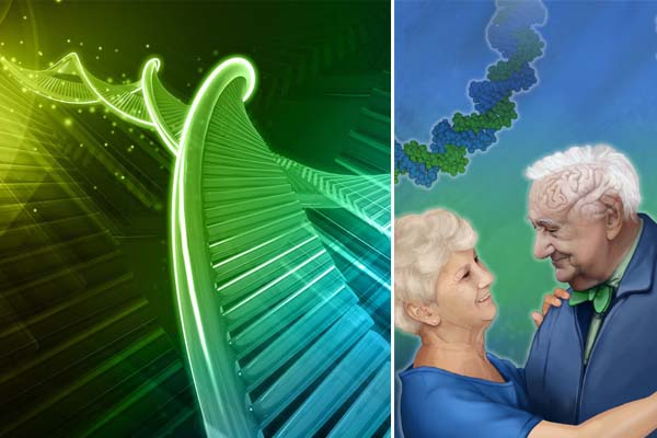 Link Between Genes And Healthy Aging Suggested By Study