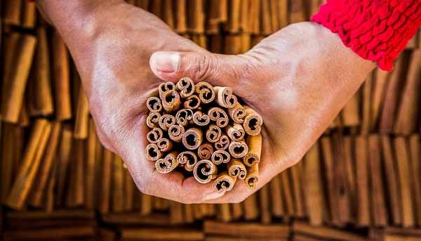 Do You Know Where Cinnamon Comes From After Watching This Video, You Will Never See It The Same Way Again
