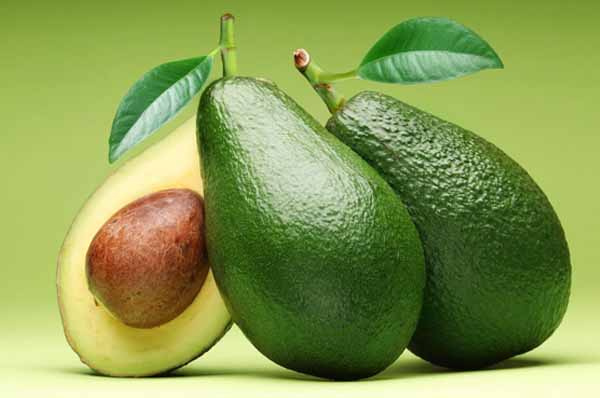 Leaves From Avocado Could Provide Some Amazing Health Benefits